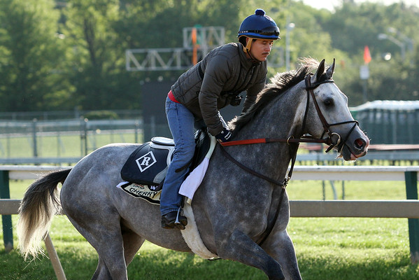 Cherry Wine (Paddy O'Prado) trains for the Preakness Stakes (Gr I) at Pimlico Racecourse 5/20/16. Trainer: Dale Romans. Owner: Frank L. Jones Jr. & William Pacella