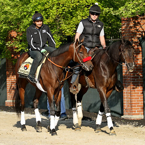 Nyquist (Uncle Mo) trains for the Preakness Stakes (Gr I) at Pimlico Racecourse 5/20/16. Trainer: Doug O'Neill. Owner: Reddam Racing LLC