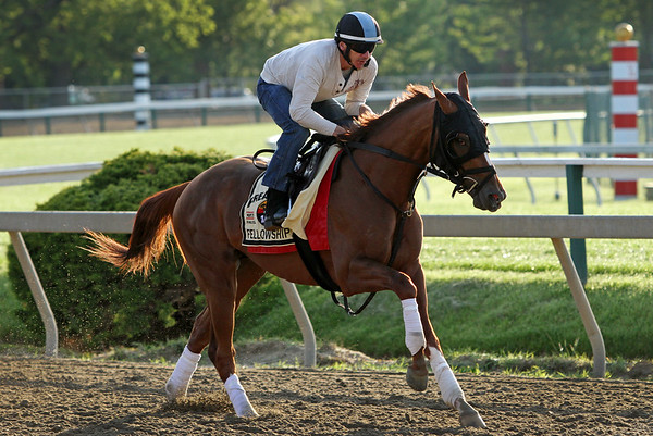 Fellowship (Awesome of Course) trains for the Preakness Stakes (Gr I) at Pimlico Racecourse 5/20/16. Trainer: Mark Casse. Owner: Jacks or Better Farm Inc