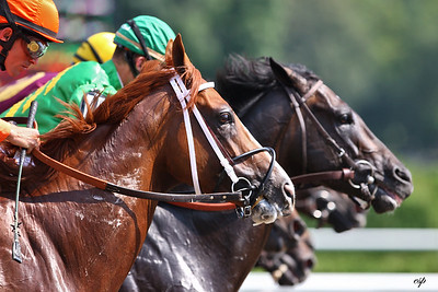 Saratoga horses break from gate.