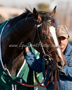 Hold Me Back (Giant's Causeway), Kent Desormeaux up, wins the Lane's End S. (G3) at Turfway Park, Florence, Ky. 3.21.2009mw
