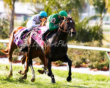 Proudinsky (Silvano), with Garrett Gomez up, wins the Mervin Muniz at Fairgrounds. 3.08.2008  ( Horse Racing Photos by EquiSport Photos )