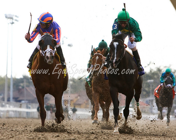 Circular Quay (Thunder Gulch, left), Garrett Gomez up, outlasts Grasshopper and Robby Albarado, to win the New Orleans Handicap at Fairgrounds. 3.08.2008   ( Horse Racing Photos by EquiSport Photos )