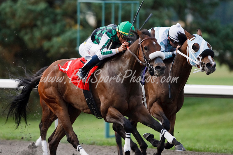 El Brujo (Candy Ride), Garrett Gomez up, wins the Kentucky Cup Sprint at Turfway Park 9.26.2009mw (EquiSport Photos)