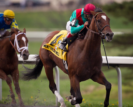 Went The Day Well (Proud Citizen) wins the Vinery Racing Spiral Stakes (G3) at Turfway Park on 3.24.2012.  Johnny Valazquez up, Graham Motion Trainer, Team Valor International and Mark Ford owners.