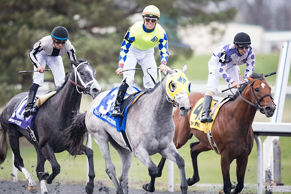 Fast and Accurate (Hansen) wins the Spiral Stakes at Turfway Park on 3.25.2017. Tyler Gaffalione up, Mike Maker trainer, Kendal Hansen owner.