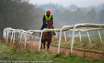 Epsom Downs Race Horses in Training