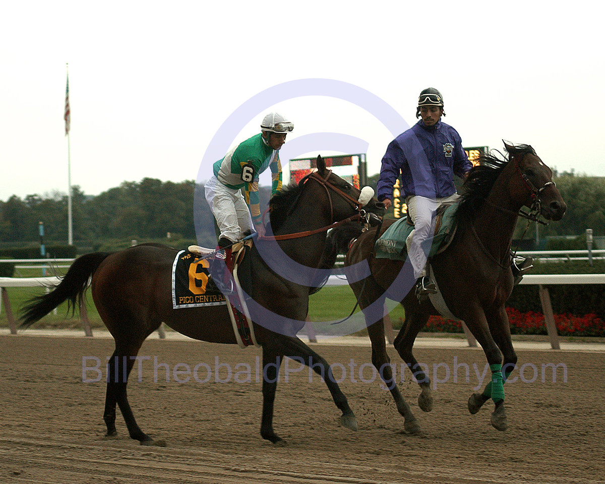 Pico Central in the Post Parade for the 2004 Vosburgh Handicap.  Pico Central defeated a classy field including eventual Bredders Cup Sprint Winner Speightstown in the Vosburgh.