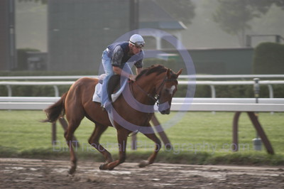 Early morning gallop in the  mud.  A horse Gallops through the mud at Saratoga Race Course early in the morning.
