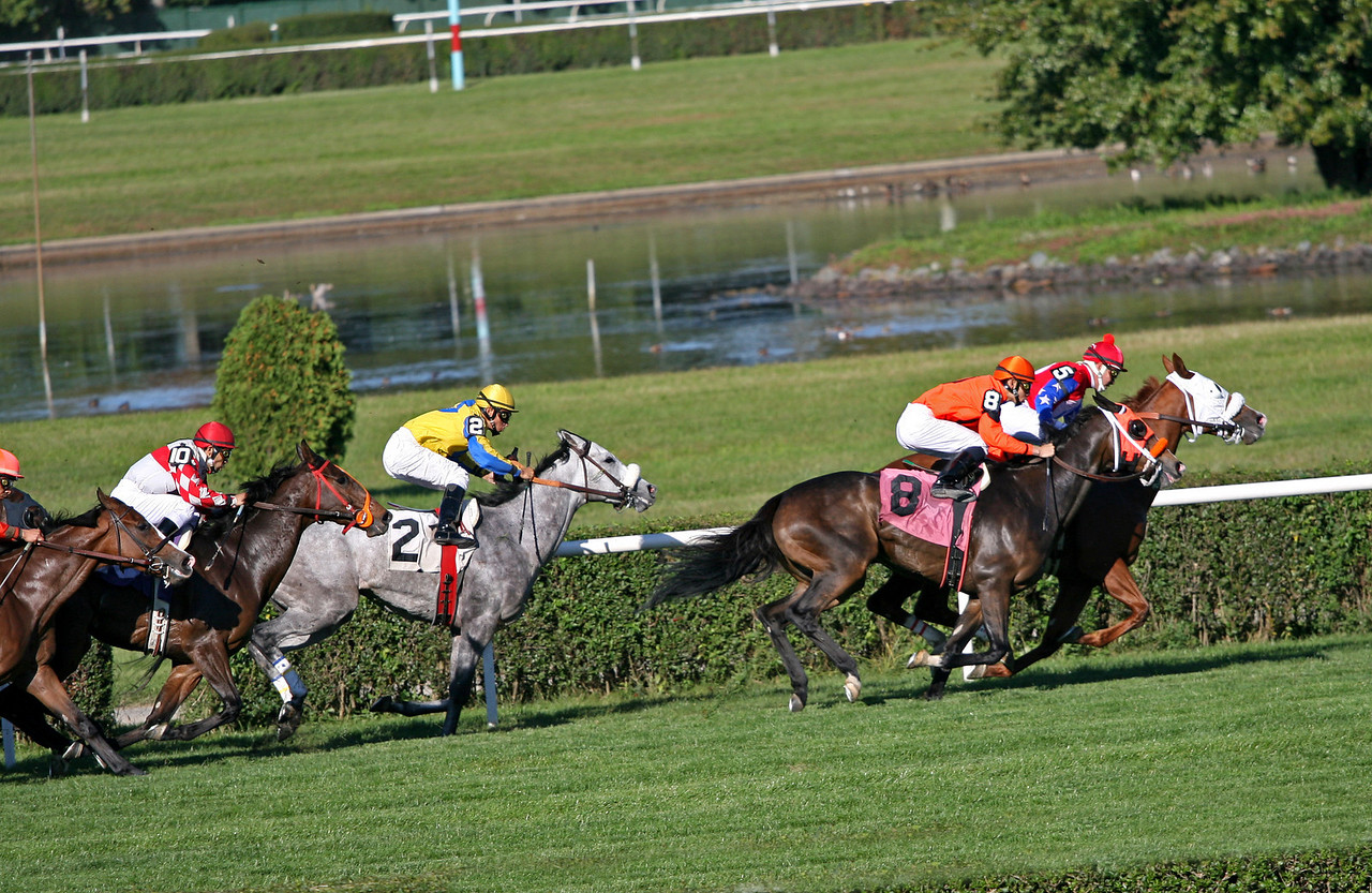 6th Race - Ambling Rose (5), Waytotheleft (8), Acquired Cat (2), and My Sister Diane (10)
