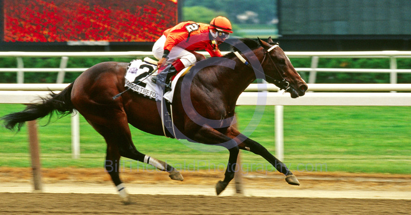 Lost in the Fog winning the 2005 Riva Ridge Stakes at Belmont Park.