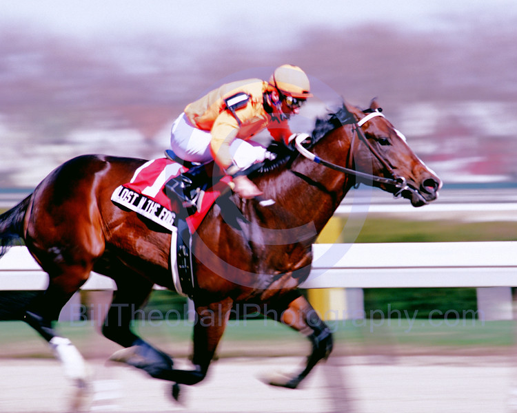 Lost in the Fog enroute to victory in the 2005 Bayshore Stakes at Aqueduct Race Track in Ozone Park, New York.