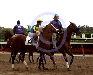 Speightstown.  Shown here in the post parade for the 2004 Vosburgh Handicap at Belmont Park.  Although Pico Central would win the Vosburgh, Speightstown would go on to win the 2004 Breeders' Cup Sprint and be named sprinter of the year for 2004.