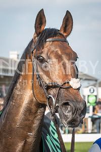 Race 4 - Auxerre - DSC_0192