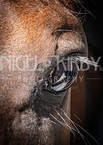 Nigel Kirby Photography