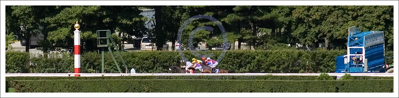 The Green Monkey finally commences his racing career in a Maiden Special Weight at Belmont Park on September 15, 2007.  The Green Monkey was the most expensive horse ever purchased at an auction.  The gavel stopped the bidding at a reported $16 Million.  The Green Monkey finished a well beaten third to a Roi Maudit who was breed by his owners.