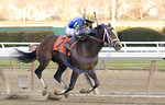 Purge winning the The Hill & Dale Cigar Mile at Aqueduct Race Track in 2005.