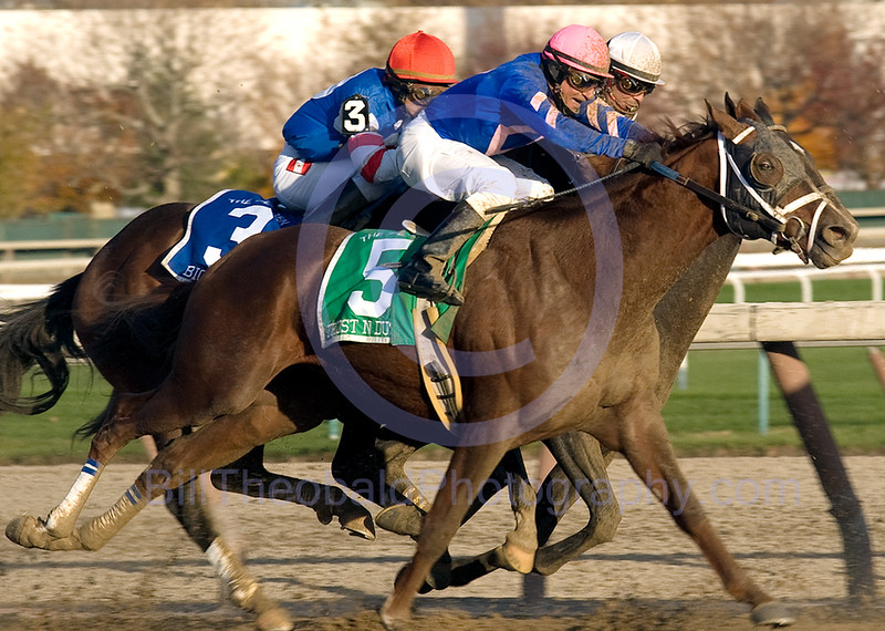 As the field passed by me during 94th running of the Remsen at Aqueduct I heard the jockeys shouting and looked up to see Alan Garcia on # 3 Big Truck betting squeezed from both sides as the #5 Trust N Dustan ridden by Cornelio Velasquez moved in on him while # 1 Court Vision and Eibar Coa the eventual winners came out into Big Truck to get around horses in front of him.  Big Truck took the worst of it and lost ALL monmentum as the field straighened away down the strecth.  Impressively Court Vision won the race by running down Atoned and just getting by him in the shadow of the wire.  Big Truck ran very well to get third after being dead last with 3/16ths of a mile to run.