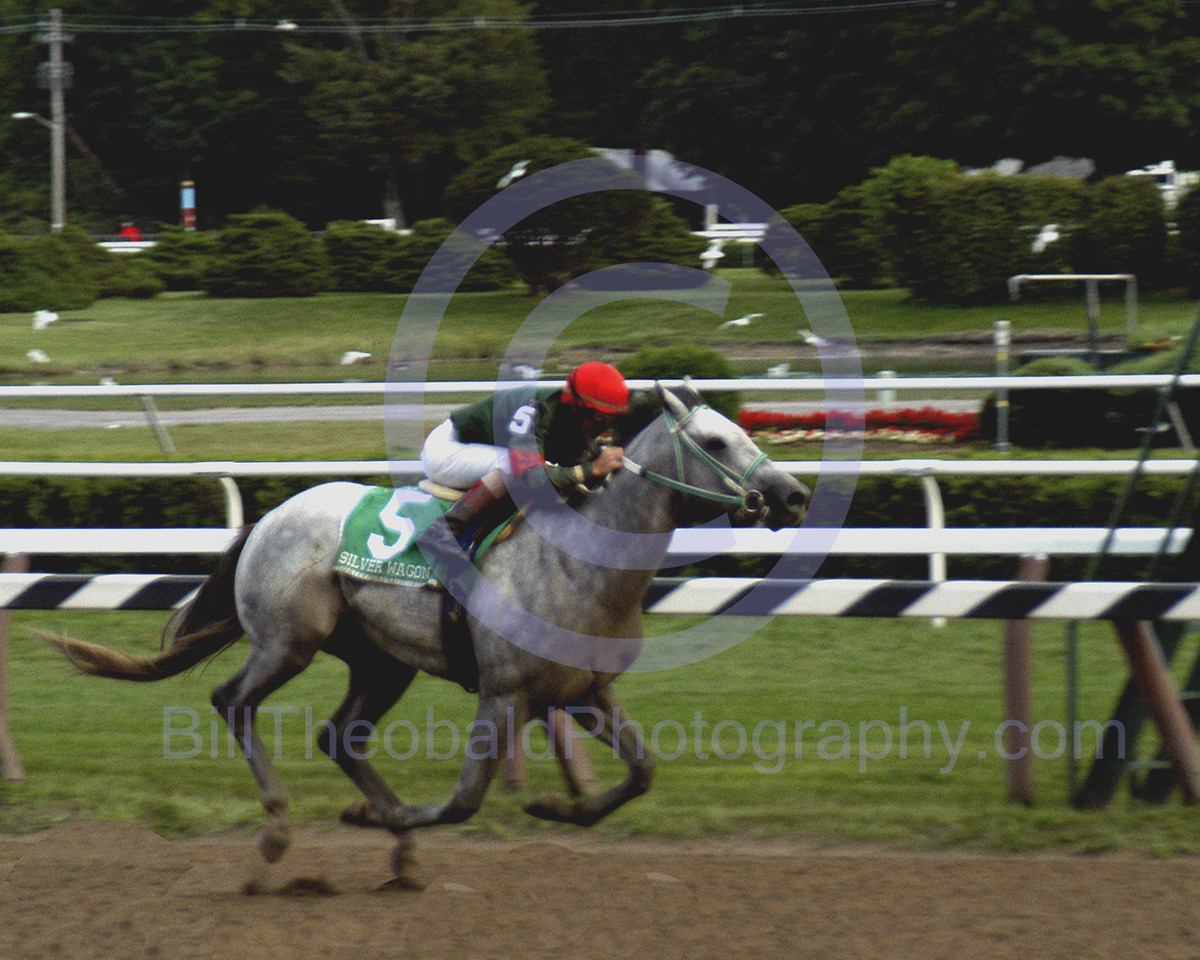 Silver Wagon enroute to victory in the 2003 Hopeful stakes beating Birdstone and Chapel Royal at Historic Saratoga Race Course.