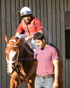 "Hall of Fame jockey Angel Cordero Jr. is on board of Belmont Stakes winner Rags to Riches early in the morning as they preapre for a work out at Saratoga.  ""Rags"" was the first filly in 102 years to win the Test of Champions."
