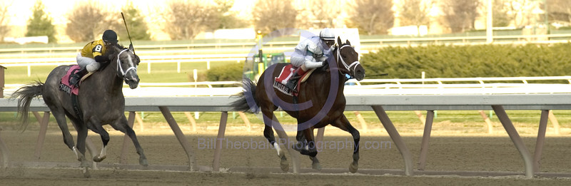 Bluegrass Cat defeating Flashy Bull in the  2005 Remsen Stakes at Aqueduct  Race Track.