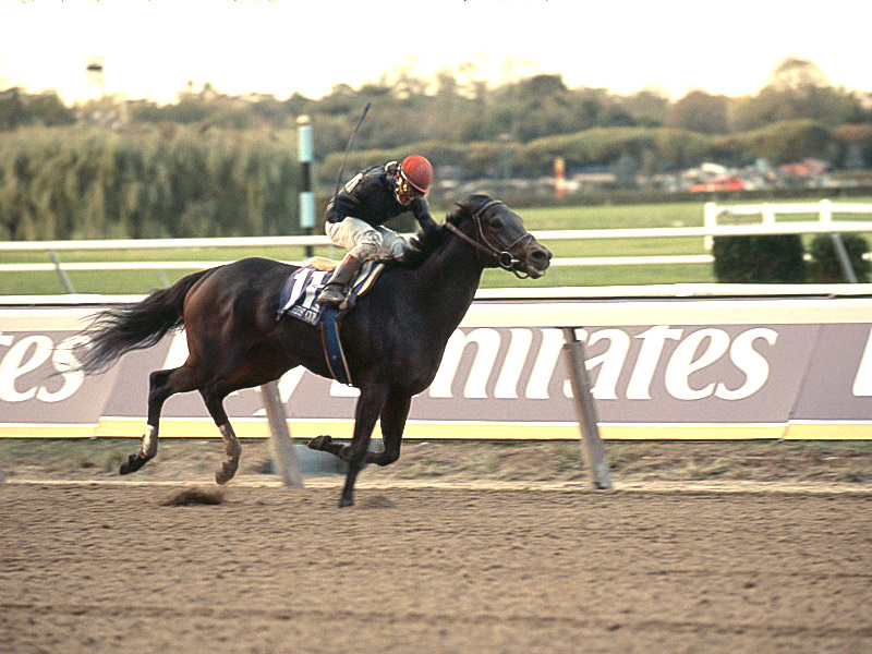 Personal Home winning the 2006 Breeder's Cup Distaff @ Belmont Park.