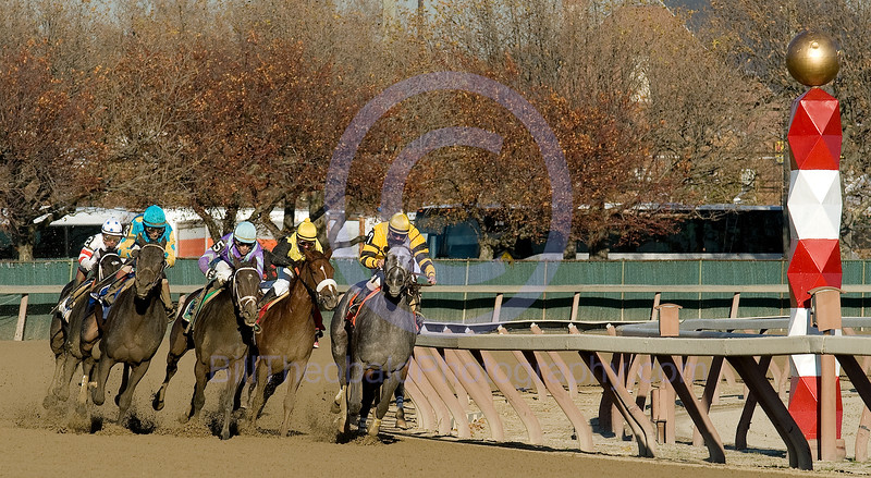 The field for the 86th running of the Demoiselle passes the Quarter pole at Aqueduct.  Mushka (#3 with Turquoise cap and yellow sleeves with turquoise dots) is widest of all as she passes the entire field to complete a dramatic last to first move around the turn.
