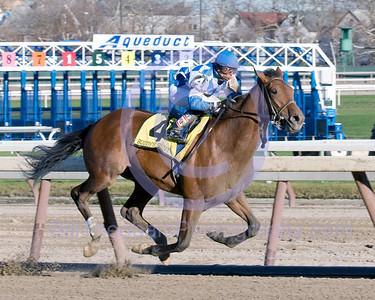 Buddy's Saint and Jose Lezcano cruise down the stretch at Aqueduct during the 96th rendetion of the Remsen Stakes for 2 year old colts.