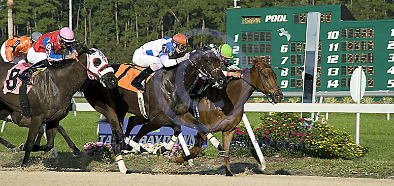 Special Cheers (Green Cap on the rail)winning the Sandpipers Stakes at Tampa Bay Downs on December 30, 2006.  In the process of winning she defeated Storm Savvy (# 7) and Foret (#8).