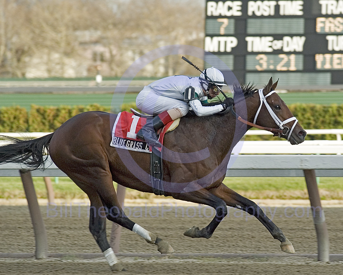 Bluegrass Cat winning the 2005 Remsen Stakes at Aqueduct in November 2005.