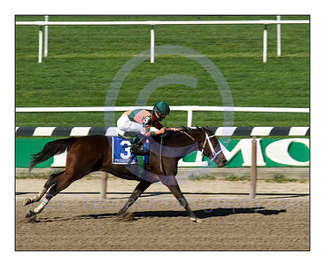 Proud Spell shown here winning the 101st running of The Matron at Belmont Park.  Proud Spell was ridden to victory by Gabriel Saez who made the trip up from Delaware for the ride.