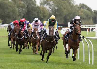 Race 2 - Court King - NKP_8692
