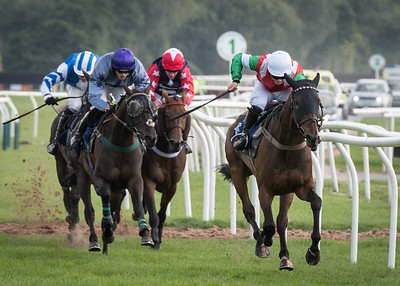 Race 2 - Court King - NKP_8715