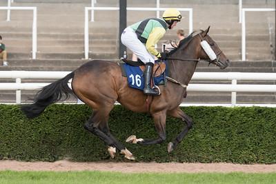 Race 2 - Adios Alonso - NKP_8611