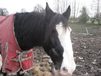 02/08 - Horse Riding