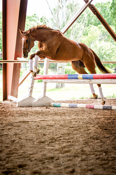 Horse Sales