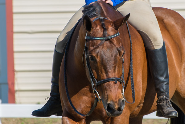 Horse Shows 12.3.16