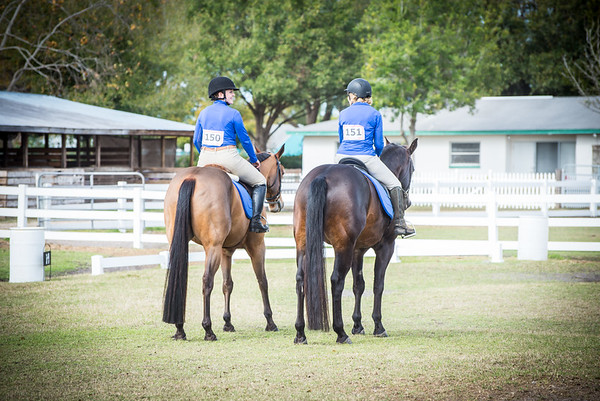 Horse Shows 2017