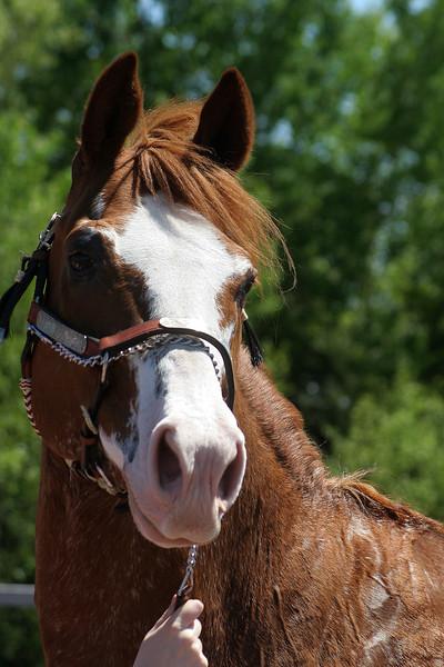 Maritime Paint Horse Association