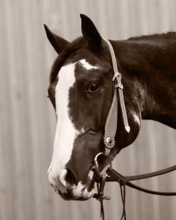 Maritime Paint Horse Show September 1 2007