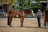Color & Gelding classes-155
