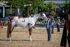 Color & Gelding classes-178
