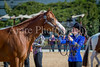 Color & Gelding classes-137