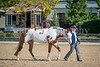 Color & Gelding classes-174