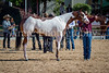 Color & Gelding classes-161