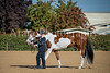 Color & Gelding classes-100