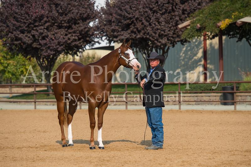 Stallions-121