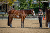 Color & Gelding classes-154