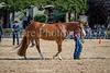 Color & Gelding classes-171