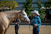 Color & Gelding classes-131